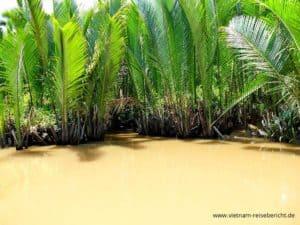 mekong-vietnam-wasser-schilf