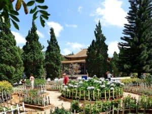 Garten in Vietnam