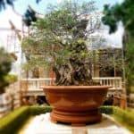 vietnam-reise-bericht-foto98